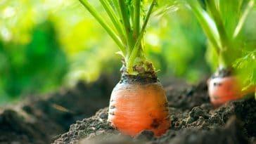 4 alimentos que protegem a sua pele dos danos solares